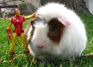 Iron Man Toy standing next to Hamster in the grass