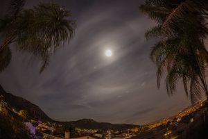 Moon and Halo framed by palm trees